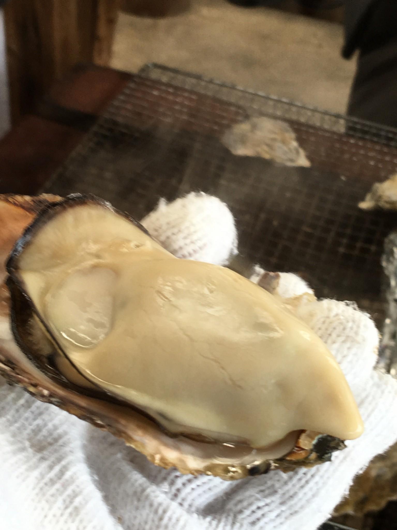 プリプリで大きい牡蠣☆