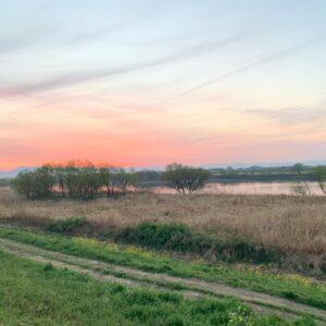久留米の河川敷