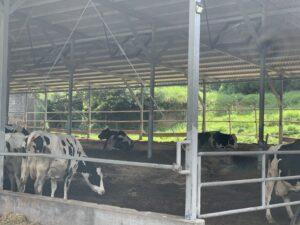 牛舎の牛さん達