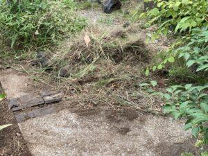 芝生の撤去作業